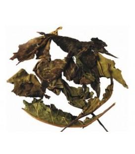 Vasaka suszone liście 100g - na kaszel