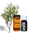 Olejek eteryczny DRZEWO HERBACIANE 30ml Niradhi Herbals